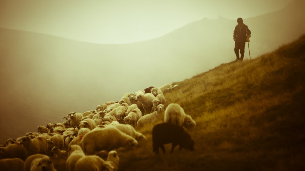 What Do Loving People And Tending Sheep Have In Common?